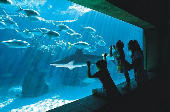 Viewing the Aquarium
